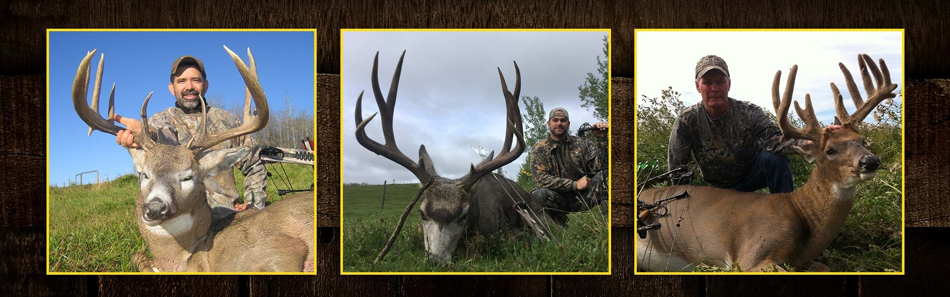 Archery Mule & Whitetail Deer in Alberta